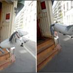 20110626 cheval volant