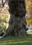 Des visages et des corps prennent forme dans le tronc de cette arbre énorme