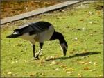 De drôles de beaux oiseaux rares