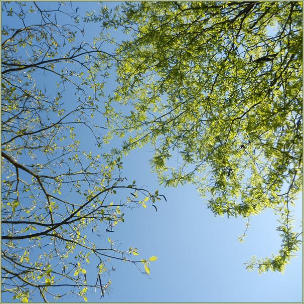 Sous les arbres ensoleillés