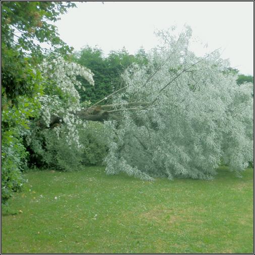 Arbre écroulé dans le jardin
